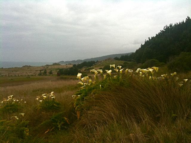 Lilies IMG_1093.jpg