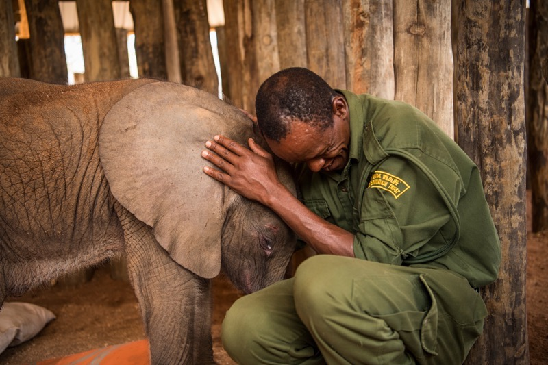 a beautiful bond between humans and elephants.