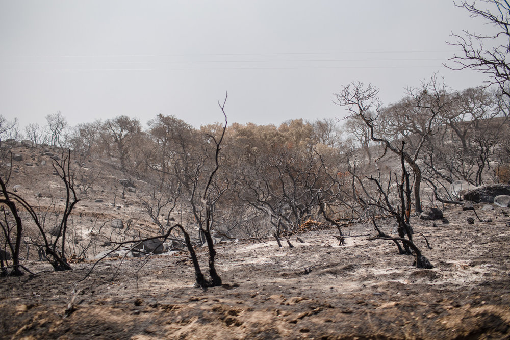 Scorched earth from a fire in Central California... This is how I feel right now.