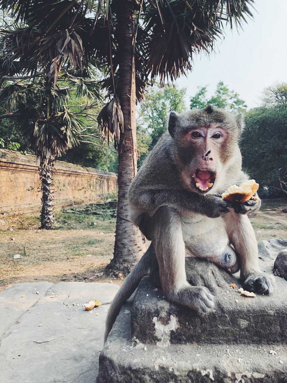 Monkey with Fangs