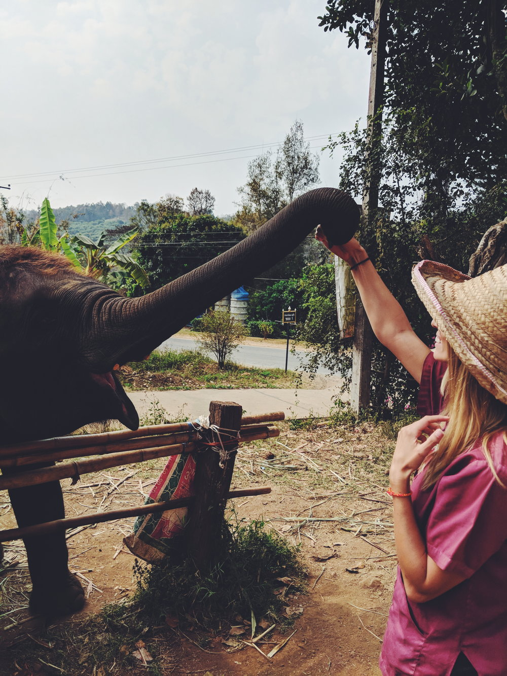 Feeding baby elephants at Elephant Rescue Park, Chiang Mai