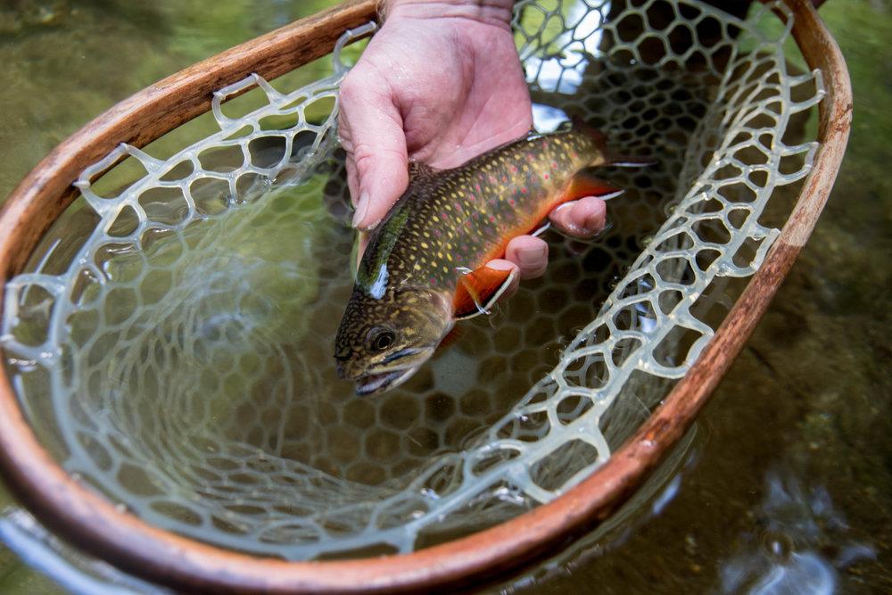 Jillian Schuller - Fly Fishing Photography