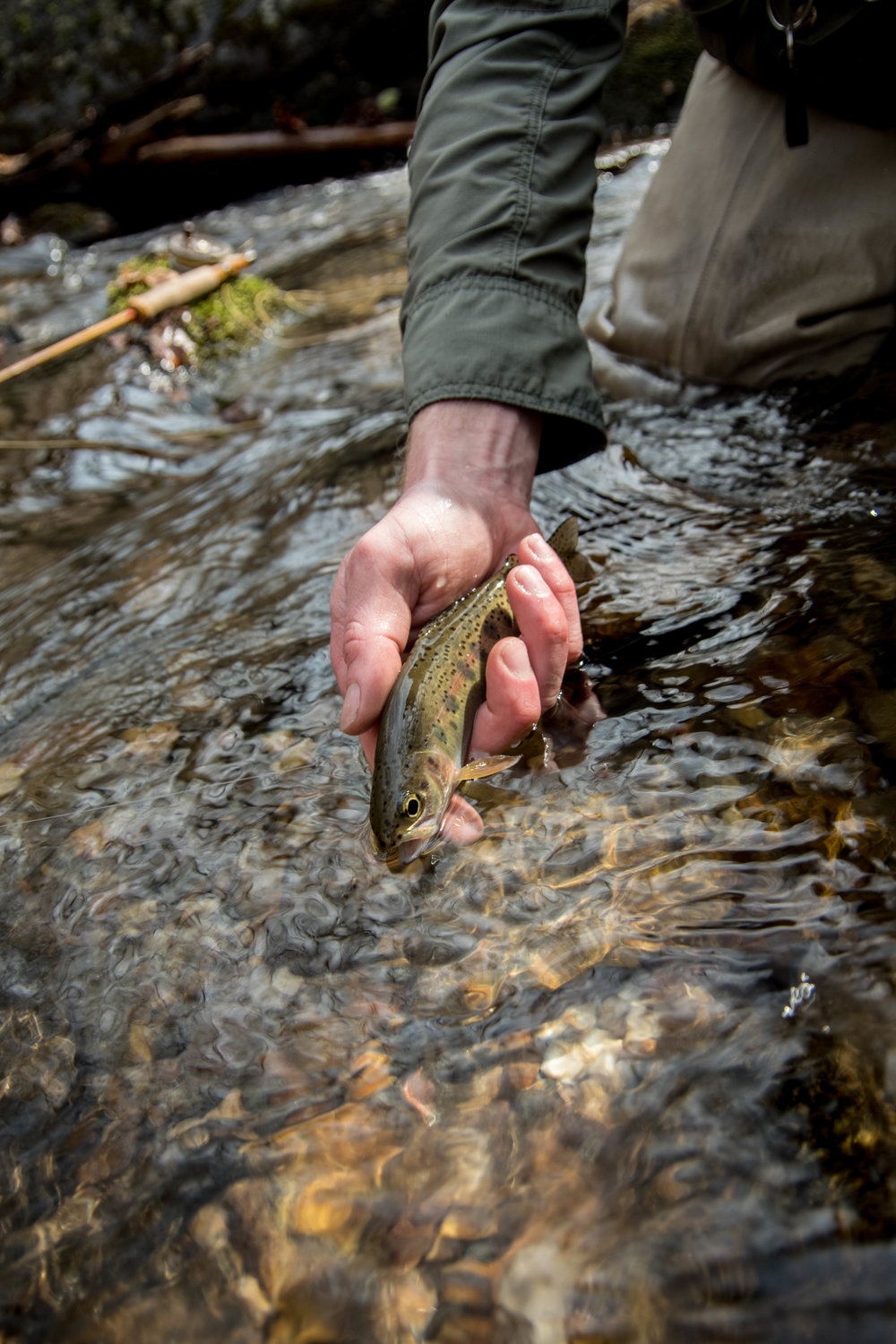 Jillian Schuller Photography- Fly Fishing