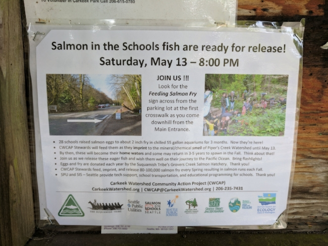 Local schoolchildren raise tiny salmon, who are later released into the streams of Carkeek Park, from which they'll journey to the Pacific Ocean... and then in the fall, return to spawn!