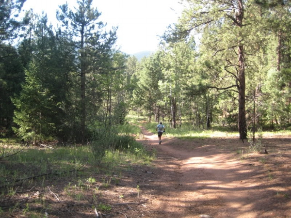 Forested trail between the Buffalo Creek and Shinglemill aid stations.