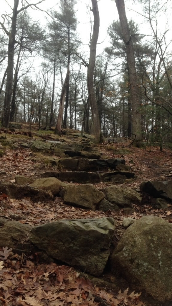 Steep stone steps on the Skyline Trail.