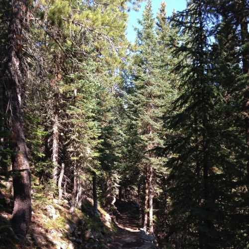A forested trail between Ouzel Falls and the higher altitudes of Ouzel Lake.