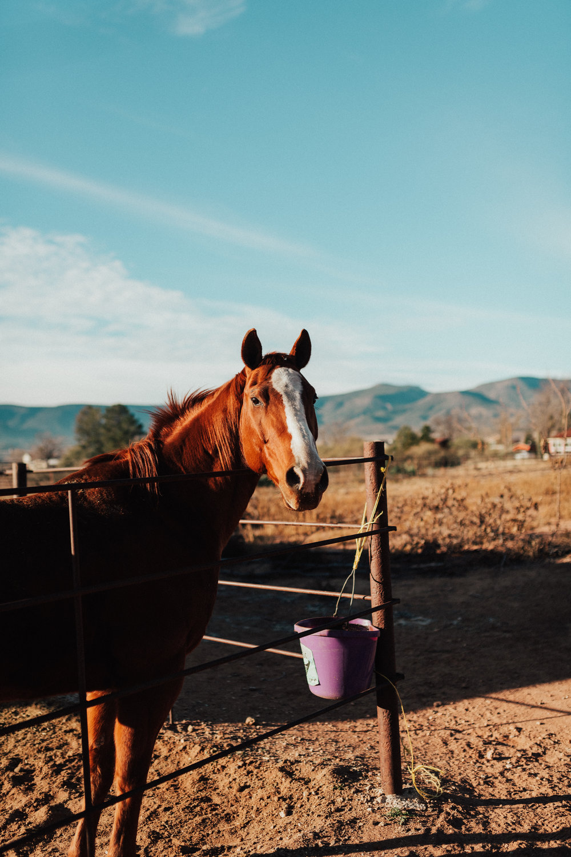 """Snickers"" - Camp Verde, Arizona"