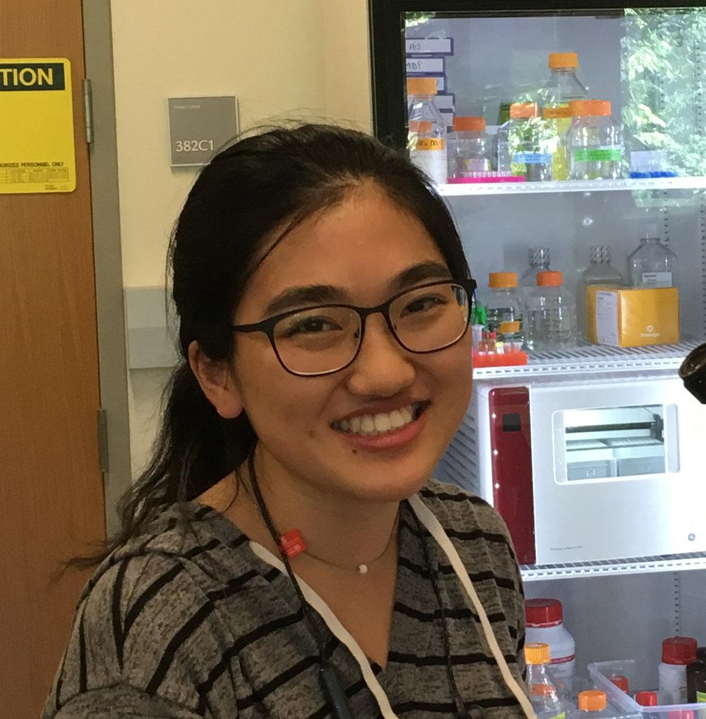 Angela Xu   Undergraduate Student
