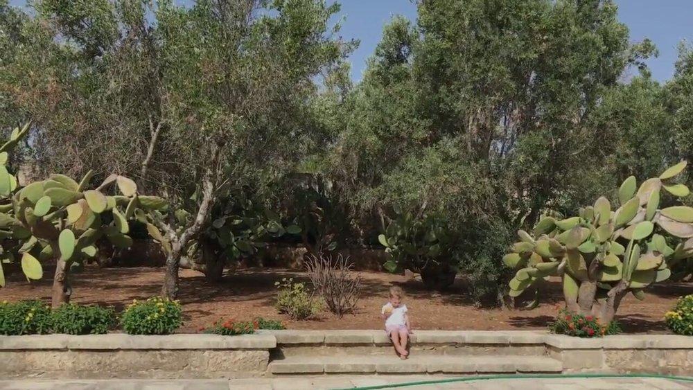 oliveiras em po