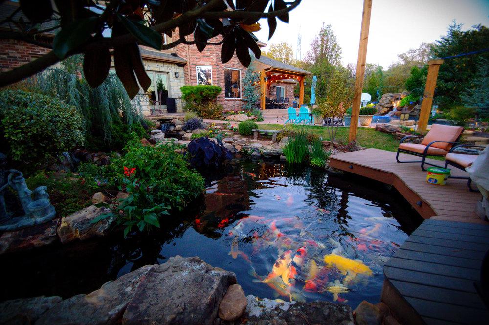 Copy of Water Garden • Koi Pond