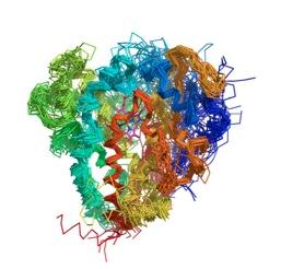 Enzyme.jpg