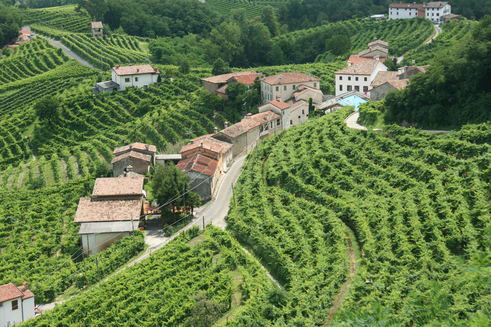 Vineyards in Prosecco territory