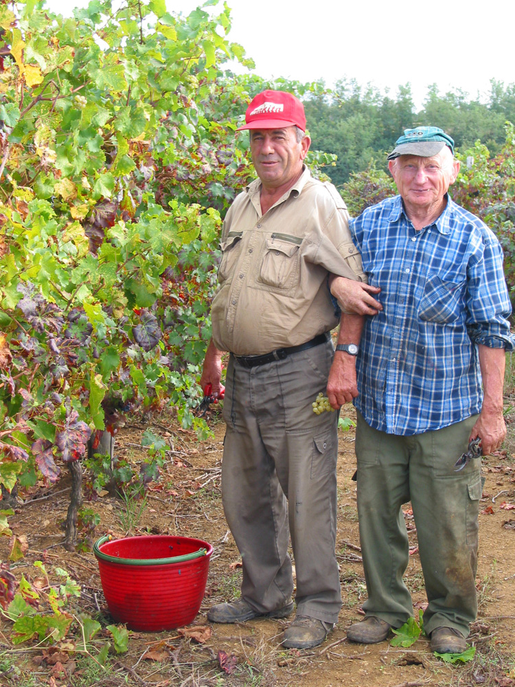 Harvest workers in Bolgheri