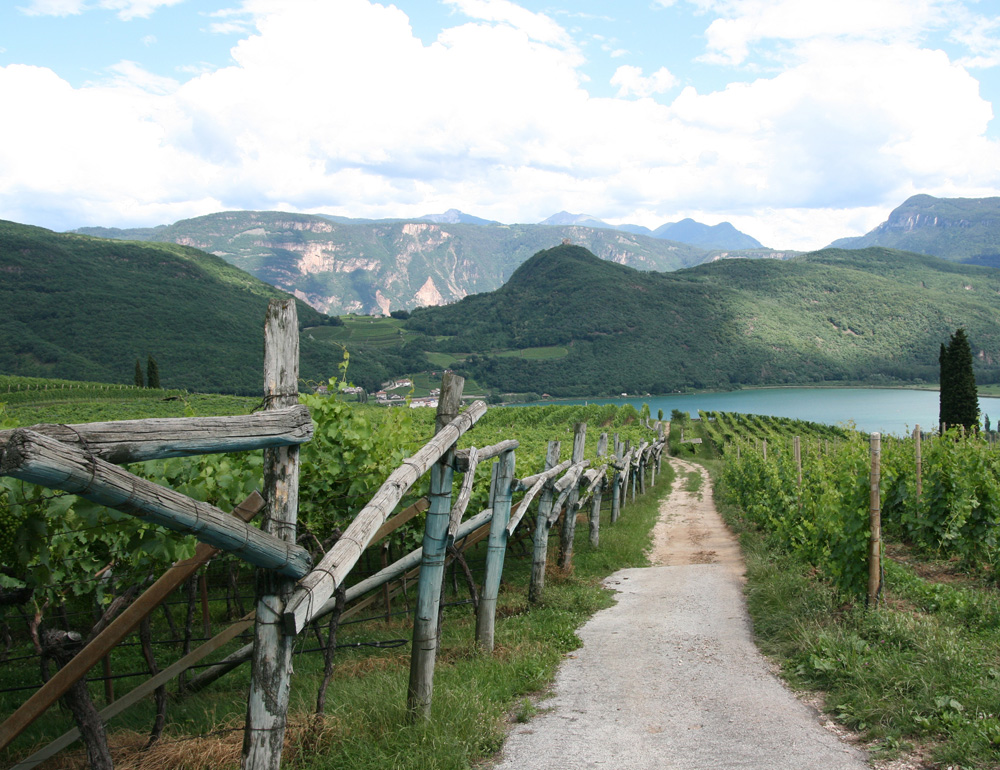 The alpine turf of Alto Adige pinot grigio, here near Lake Caldaro.