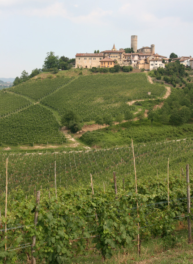 Vietti's prized turf for Barbera d'Alba, flanking the town of Castiglione Falletto in Barolo DOCG land.