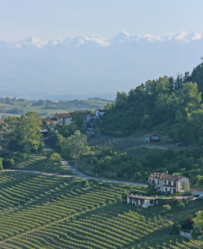 The Alps loom in the distance, seen from La Morra, Barolo's highest commune.