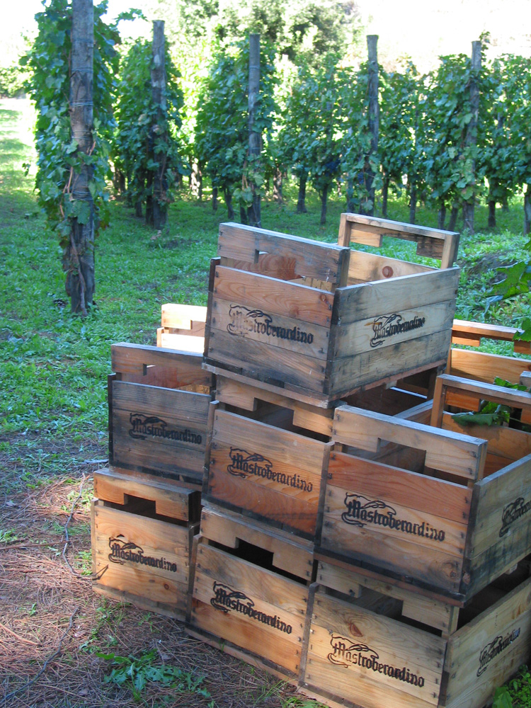 harvest-crates_5181sm.jpg