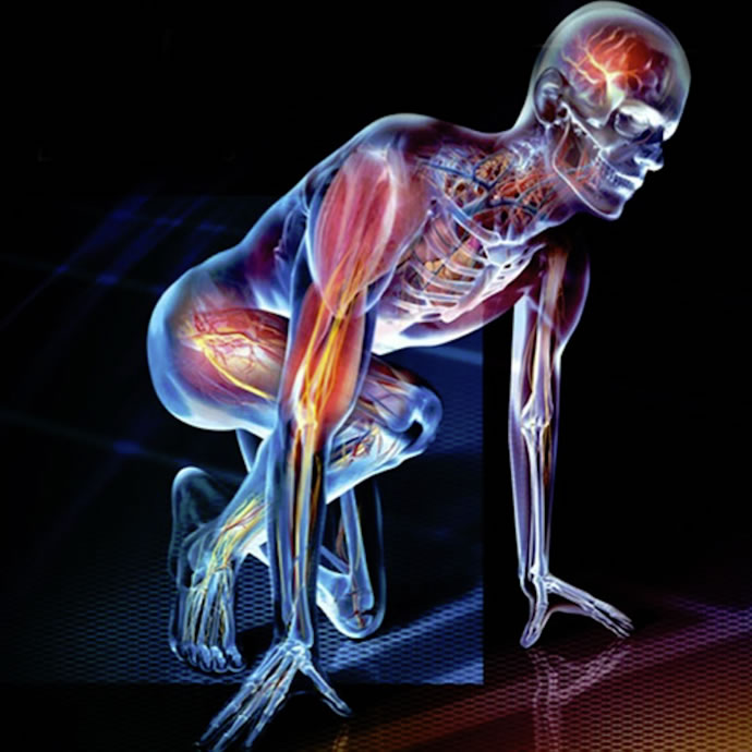 fisiologia.jpg