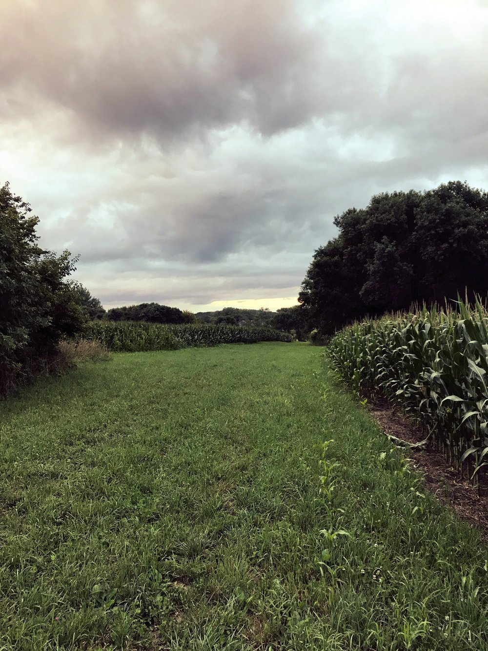 A peaceful meadow surrounded by rows of corn and soybeans.