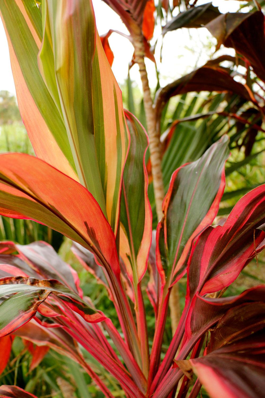 plants_web.jpg