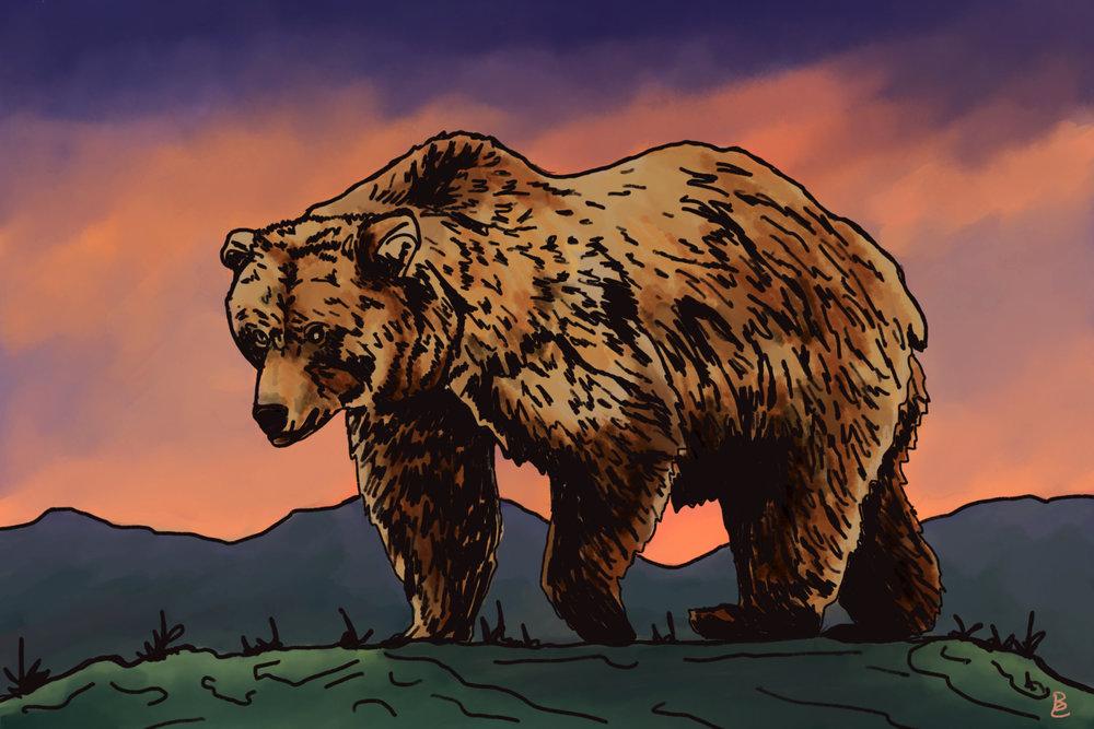 Grizzly_Bear.jpg