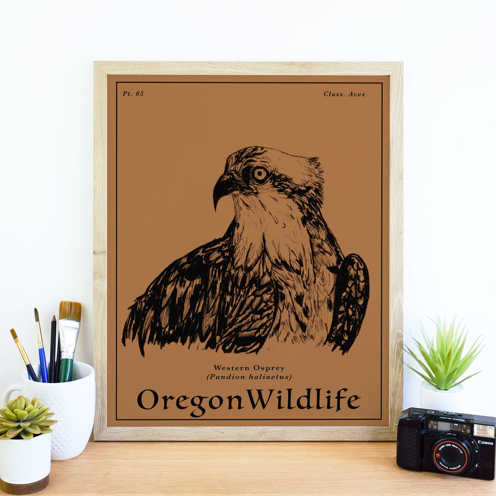 Osprey_wildlife.jpg