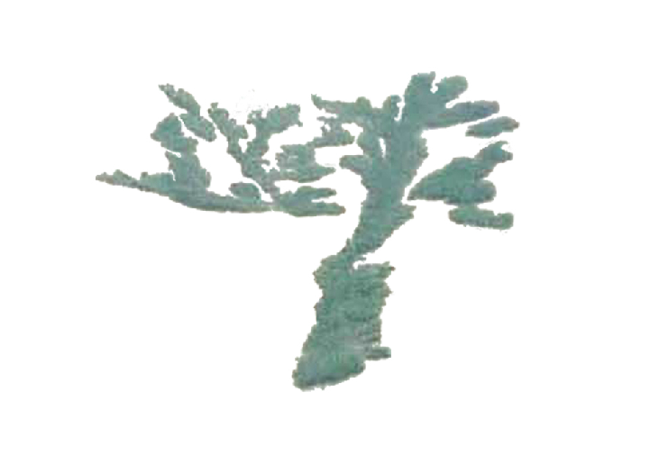 Bonsai Landscape, 2003