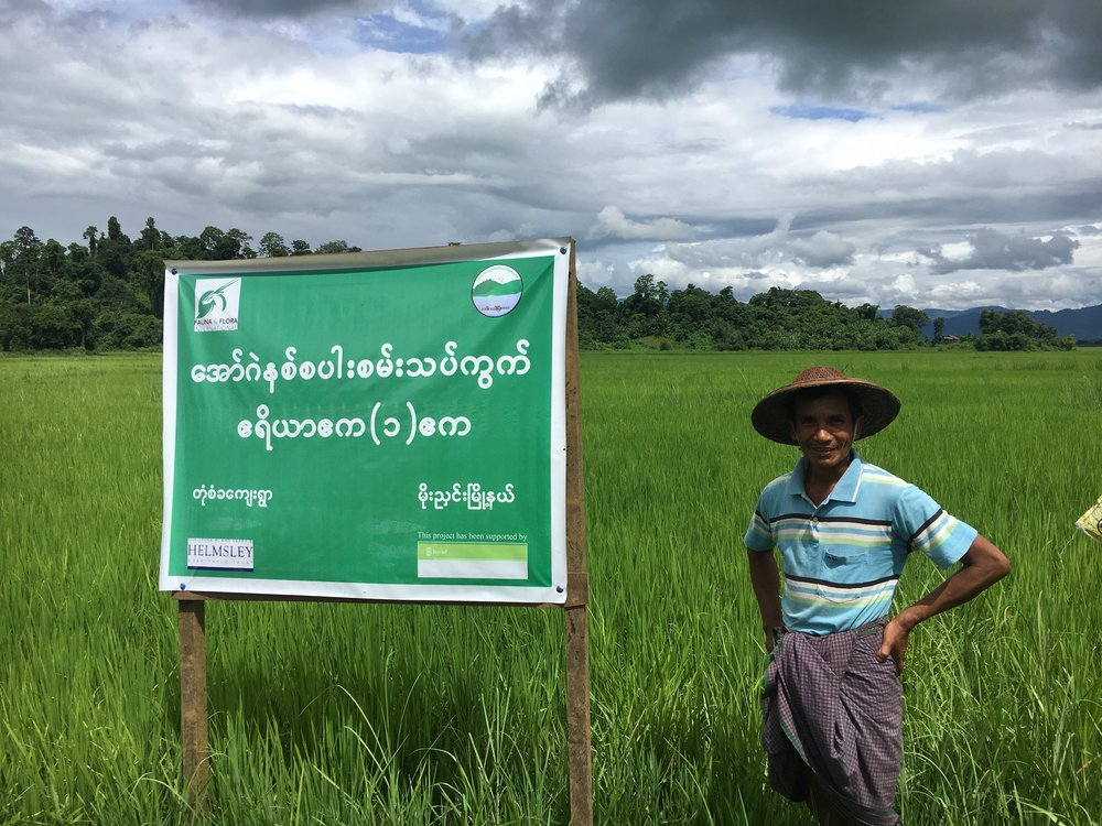 Aung Maung Zaw proudly stands in front of his organic rice fields, a program supported by FFI and the Norwegian Agency for Development Cooperation (Norad).