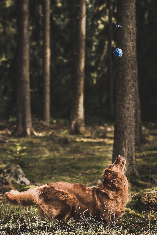 Hundfoto - Tollare