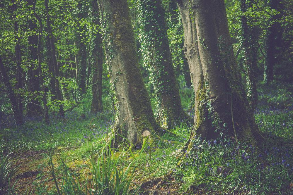 3treeswoods.jpg