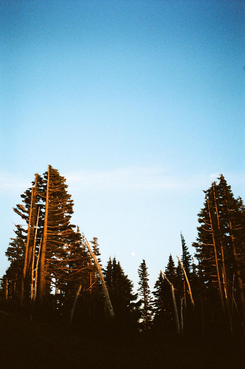 analog photo of sunset in oregon