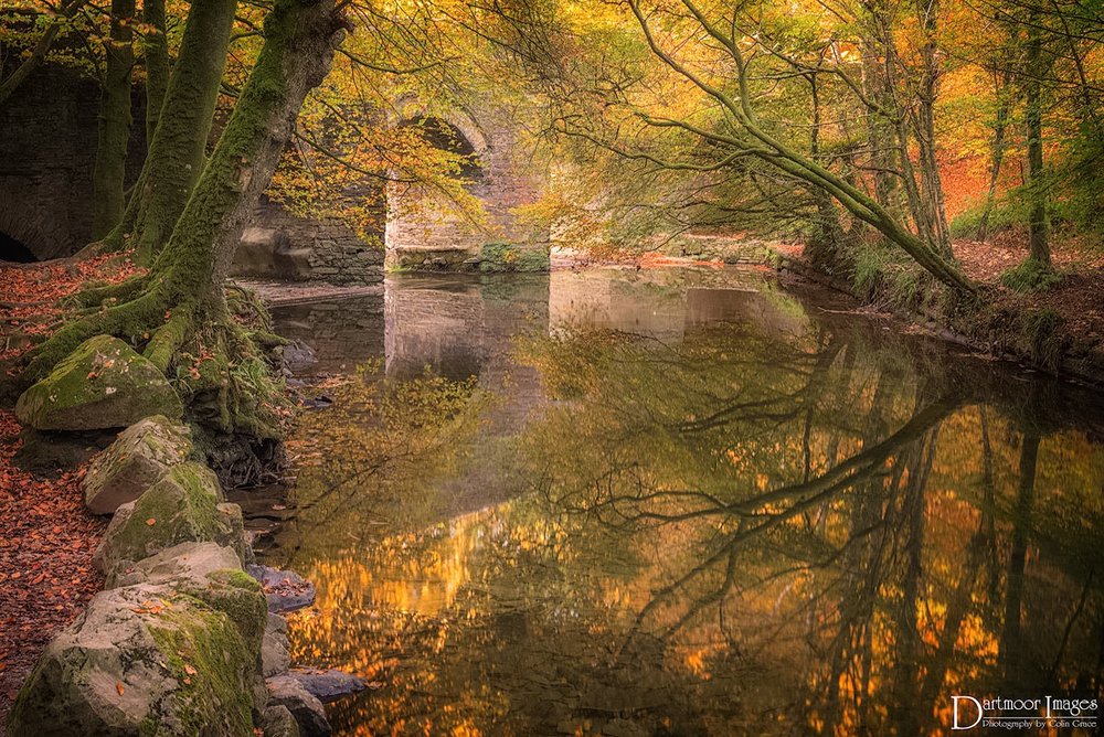 Autumn at Plym Bridge