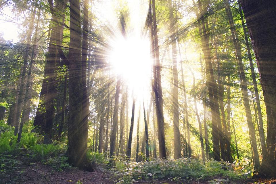 nature-2576033_960_720.jpg