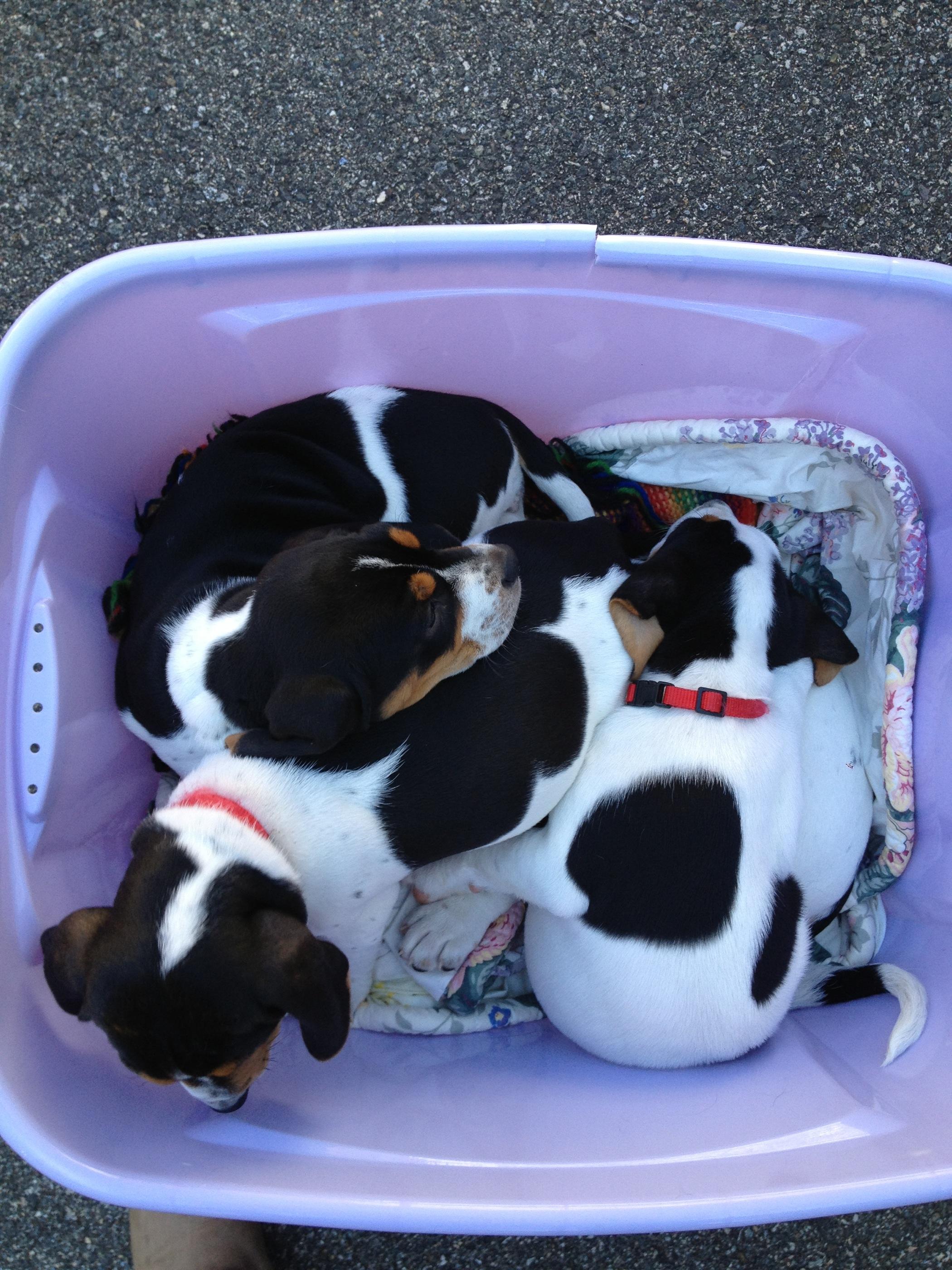 Great dog rescue meet greet beantown hounds suzy m4hsunfo