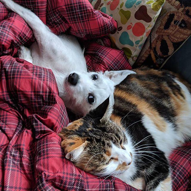 Purr pillows are the besht!  #lunatunaduna #moonie