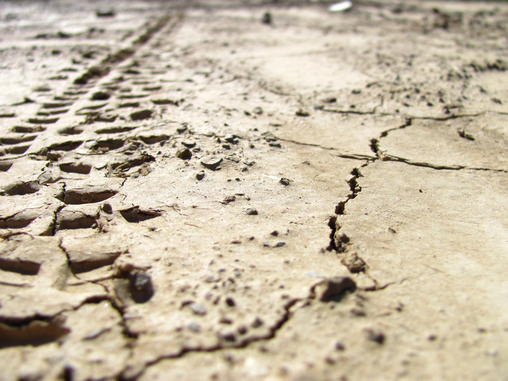 Tracks in the mud, from my personal photos