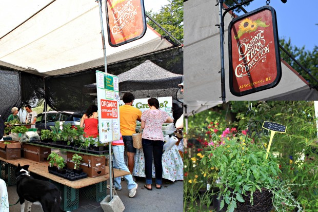 Vancouver Farmers Market Trout Lake Plants