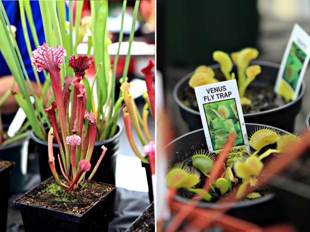 vancouver farmers market plants