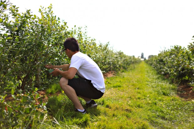 8 blueberry picking vancouver canada