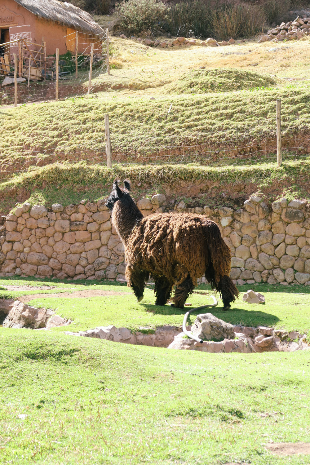 And yes that's the chewbacca version of the llama!