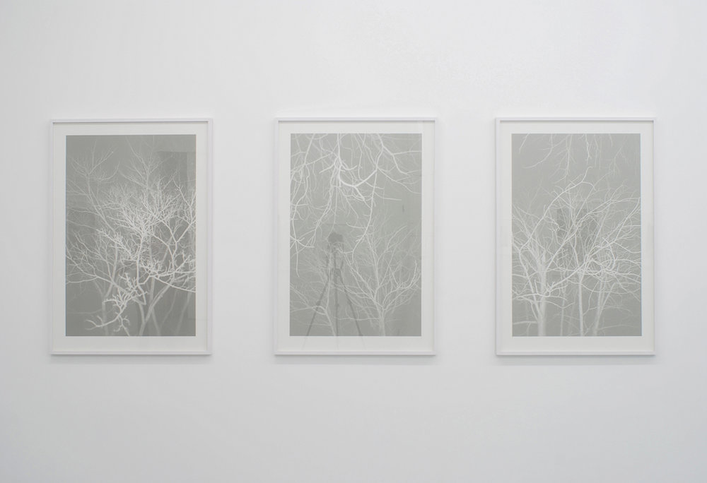 Ola Rindal,  Night (Tree I) ,  Night (Tree II), Night (Tree III),  2009, Inkjet print, 124,6 x 82,5 cm