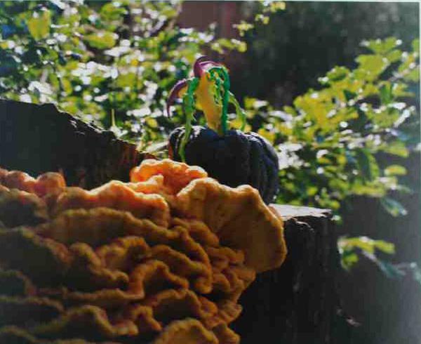 Janaina Tschäpe,  Kurbicus Spongeata,  Botaninca, 2005, R-print, 10 1/2 x 13 inches