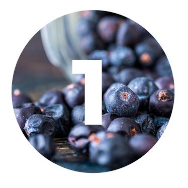 ENEBRO - Picante y aromático, utilizamos el enebro como base para nuestra ginebra. El enebro han viajado el mundo como ingrediente medicinal y culinario hasta que finalmente se convirtió en un componente esencial para todos los ginebra del mundo.
