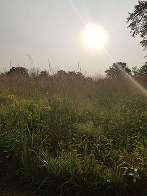 Prarie views at Afton State Park