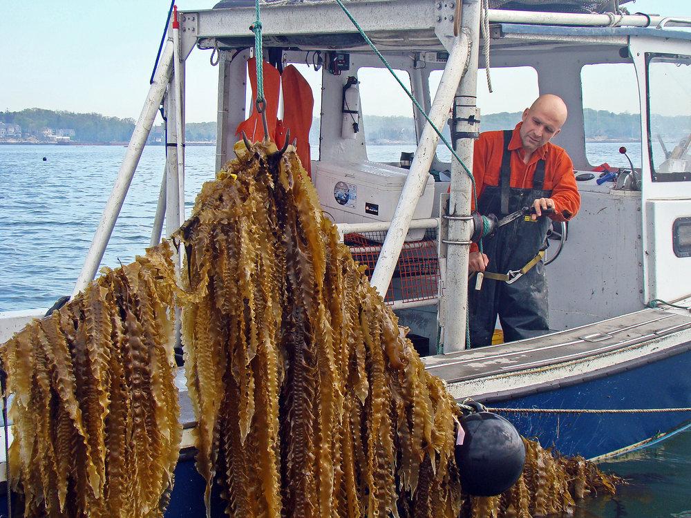 seaweed 3 HR.jpg