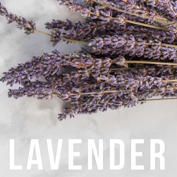 lavender-essential-oil.png