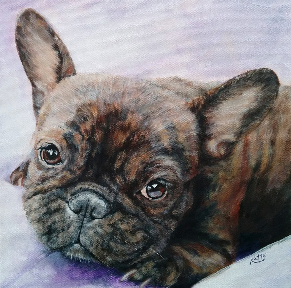 """Lua (the French bulldog)"""