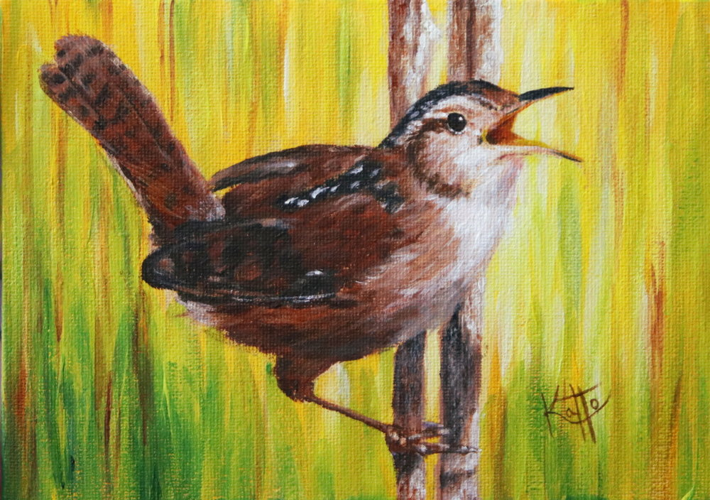 """I will always love you, Girl! (marsh wren)"""