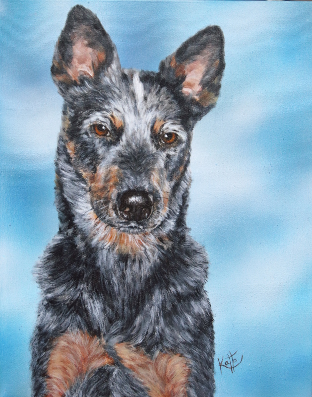 """Boodah (the Australian cattle dog)"""